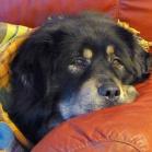 Simus in sofa P1630360