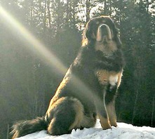Kaluha 1m 5 years old. Thanks Thord for this lovely picture of King of the hill!