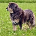 Aquila 8,5 years old.