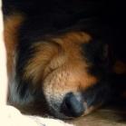 Humla asleep in dogshouse P1650569