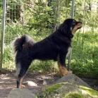 Yoga on guard P1660249