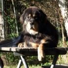 Yoga on table P1660287