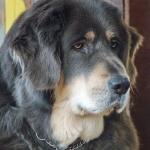 Aquila 9 years old
