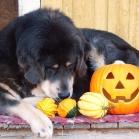 Aquila and pumpkins P1680154