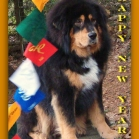 Humla SAYING HAPPY NEW YEAR  P1690008