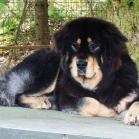 Yoga on dogshouse P1690002