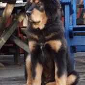 Bacchus sitting on veranda P1710421