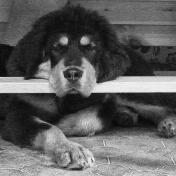 Sleeping under table