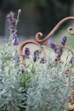 Lavendelhydrolat
