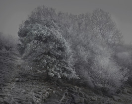 Moonlit Trees, 48 x 60 cm, edition of 35
