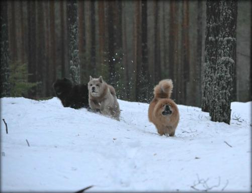 Priscilla, Nova och Donna