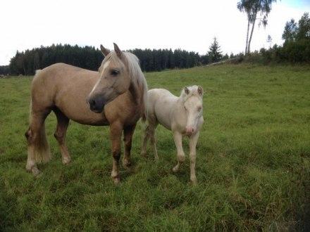 Mai och Mabon njuter av nytt gräs!