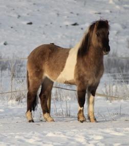 Bilden jag såg på Hästnet. Föll för hennes utstrålning