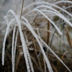 20091203_frost_0168