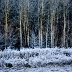 20091203_frost_0447