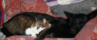Arina och Tyson softar