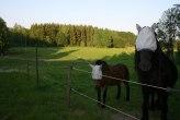 hästarna i hönshushagen