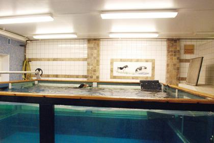 Vår andra pool har väggar helt av glas, och är 4 x 4 meter, och 1,30 meter djup. I denna har vi möjlighet att studera hundens rörelser under vattnet och bedöma hur hunden simmar.