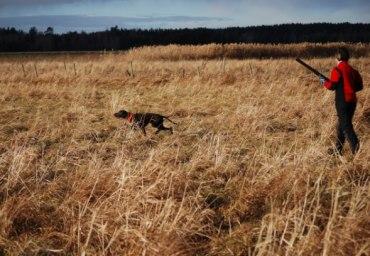Jagr som unghund på fält...