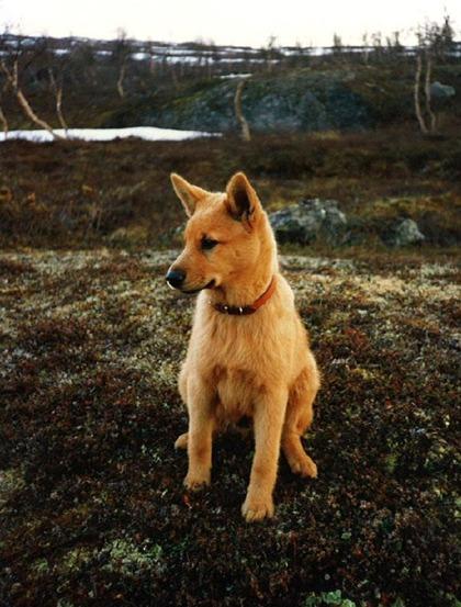 Mikko - en tidigt jaktmogen skallkung!