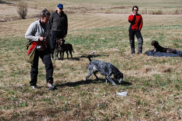 En nej-kommando övning med hundgodis som störning....