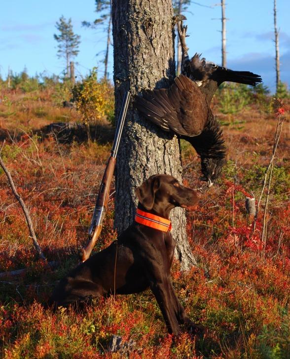 Jaktfröydens Jagr 19måndar, en glad liten kämpe.
