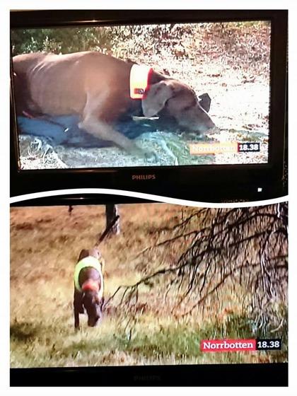 Lynx och Jaana gör jaktreportage på TV