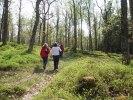 vandring i blåbärs skogen