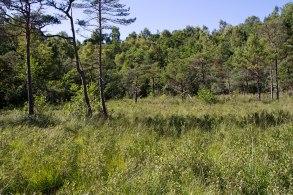 Mossen där Myggblomster växer