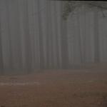 Höst-Dimma i Tallskogen