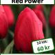 Red power, 10 lökar