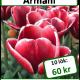 Armani, 10 lökar