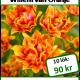 Willem van oranje, 10 lökar
