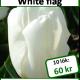 White flag, 10 lökar