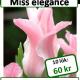 Miss elegance, 10 lökar