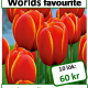 Worlds favorite, 10 lökar