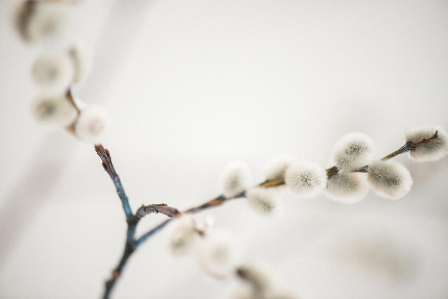 Miraklet i renässansen. Storheten i litenheten. Urkraften i varendra knopp. Av Rebecca Wallin.