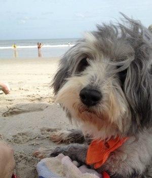 Murphy 14 år på semester i Florida