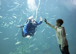 Bild: Oceanarium / Hirtshals