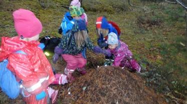 Myrorna hade inte vaknat idag i  myrstacken som vi tittar på när vi är i skogen. Idag hade Solweig med sig sockerbit till myrorna . Alla får ta med något till myrorna från frukosten, så får vi se vad myrorna tycker är gott.