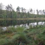 Fisklösen En av de första källorna till Ölen-Storbjörken-Mälaren