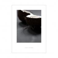Print Coconut #3, Fritsch Gunterberg