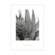 Print Vegetation #2, Fritsch Gunterberg