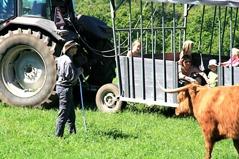 Gör en paus vid en fårfarm på vägen. Åk med på en lammsafari, besök hantverks- och köttboden eller ta en matbit på gårdens restaurang med möjlighet till picknick i parken, dag 1.
