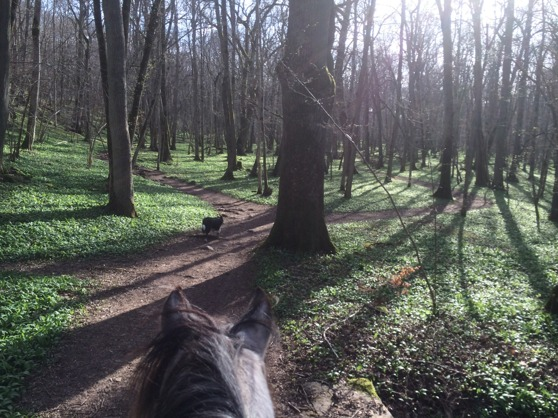 Look how beutiful the forest is with all the springonion on the ground! Beutiful to look at, fantastic to eat ;-) At this time in year, i like to ride in the forest everyday!