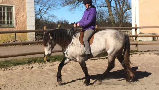 Eamonn was a superstar today! so much energi and went easily into the collection. Lovely little ponie!