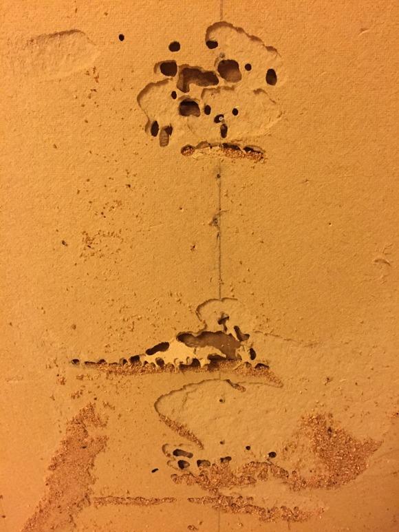 Bakom den gröna masoniten gör vi denna upptäckt. Myror har varit här. Vilken sort och om de fortfarande huserar nånstans i huset, återstår att se. Vi hoppas på vanliga svartmyror, som numera har flyttat. Worst case scenario är hästmyror...