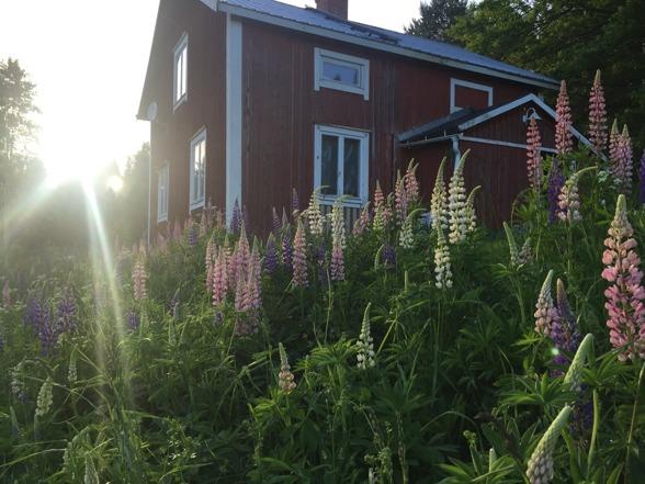 2016-06-15 Åter i ett blommande Furuhult.