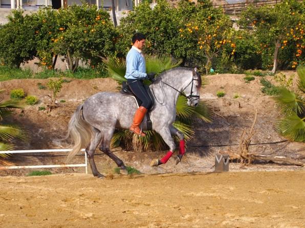 Fast Zurron Alhamilla, född 2007 e Zurron X