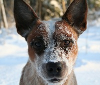 An ACD should have a alert expression.
